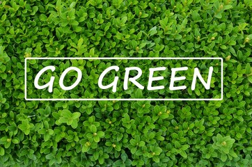 """Evergreen shrub with """"Go green"""" message"""