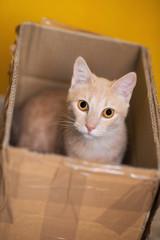 Gattino nella scatola di cartone