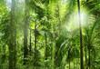 Leinwandbild Motiv Regenwald