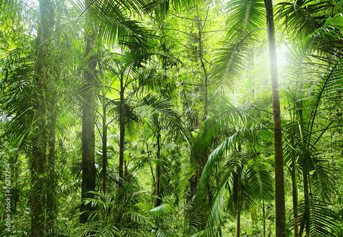 Obraz na Szkle Regenwald