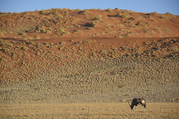 Oryx at Namib-Naukluft National Park, Namibia, Africa