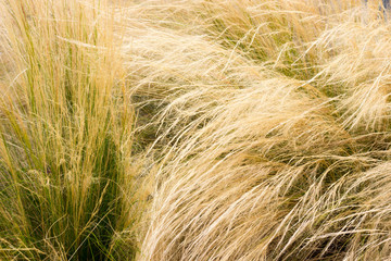 almost dry grass