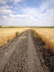 Camino de tierra en campo de trigo