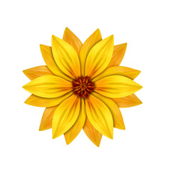 abstract yellow flower illustration isolated on white