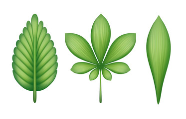 abstract green leaves illustration isolated on white