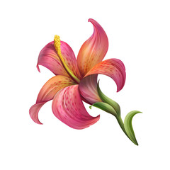 abstract red lily flower illustration isolated on white