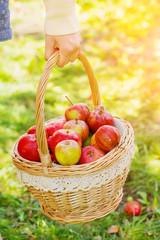 Woman holding basket full of apples