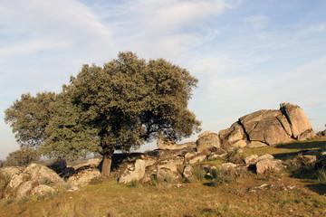 Encina y granitos en la Morisca, Montehermoso, Cáceres, España