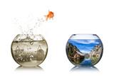 Fototapety fish rethink concept