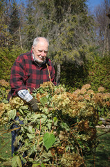 grandfather cleaning his yard at Fall time