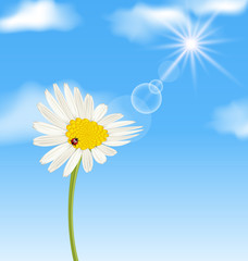 Chamomile flower and blue sky with clouds