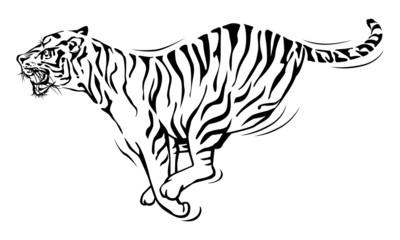 Tiger running.