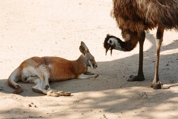 Animals  at Currumbin Wildlife Park, Qld, Australia