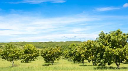 Beautiful Cuban Countryside
