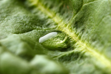 Macro view of dew drop on leaf