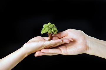 緑の木を大切に持っている人間の手