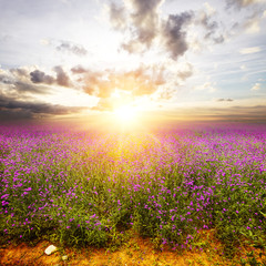 flower field and skyline during sunrise