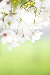 flower bloom in spring