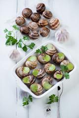 Bourguignonne snail au gratin, above view, studio shot