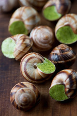 Close-up of snails with garlic butter, studio shot