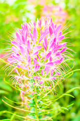 pink blossom flower on green background