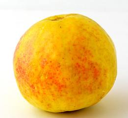 yellow guava fruit