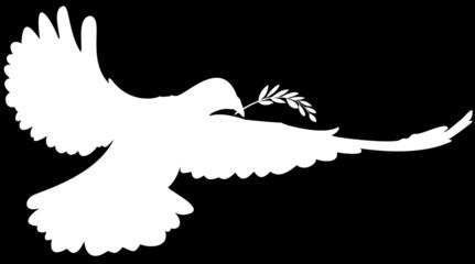 colombe de la paix et rameau d'olivier, fond noir