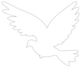 colombe de la paix contour