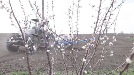 Tractor lifts and turns and drill with cherry blossom