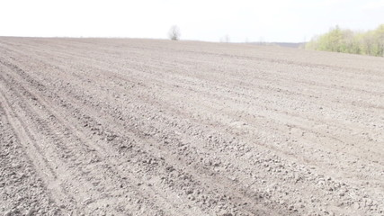 Tractor with planter stands on the black plowed field