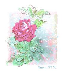 hand drawn  watercolor pink rose