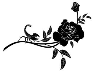 rose and scorpion