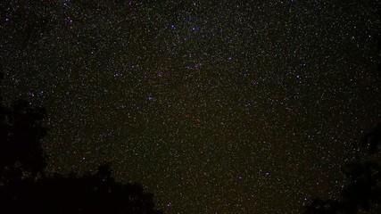 Star Field Above Tree Line