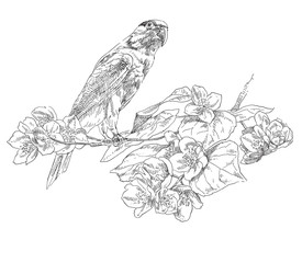 Hand-drawing parrot sitting on branch with flower