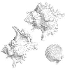 Set of various sea shells.