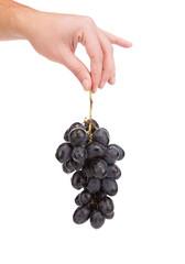 Hand holds blue grape.