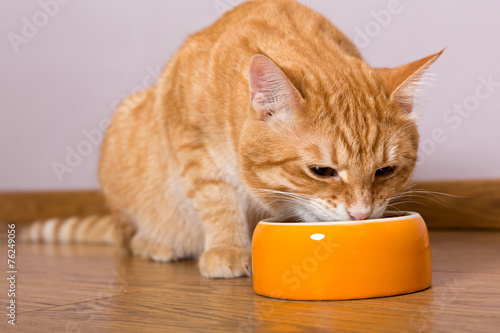 Keuken foto achterwand Kat Red cat and bowl of dry food