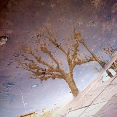 Árbol reflejado