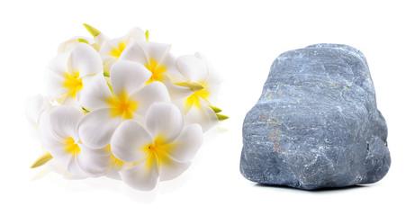 Plumeria flowers  on white background
