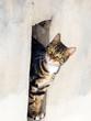 canvas print picture - Katze in einer Maueröffnung