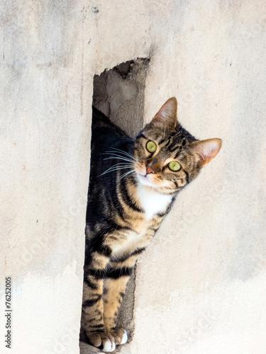 canvas print picture Katze in einer Maueröffnung