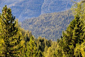 Blick über Nadelwälder