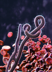 Ebola virus microscopic view concept