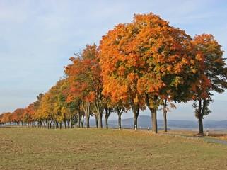 Ahornallee im Herbst