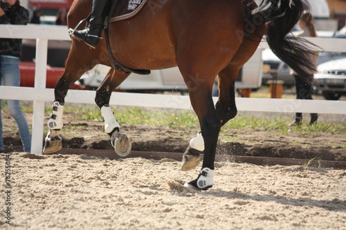 Cantering horse legs close up