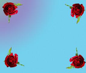 rose on pastel  background