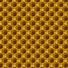 Texture di girasoli