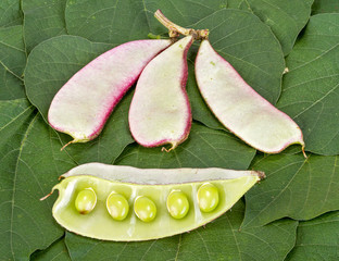 Hyacinth Bean - Dolichos lablab L. on green leaves