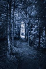 Dark Forest Path - Infrared