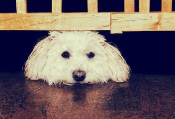 Resting Under the Gate - Retro